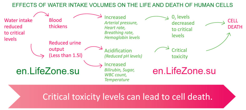 Effects-of-water-intake-volumes-on-the-body