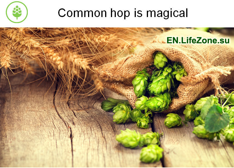 InflaCor-Common-hop-is-magical