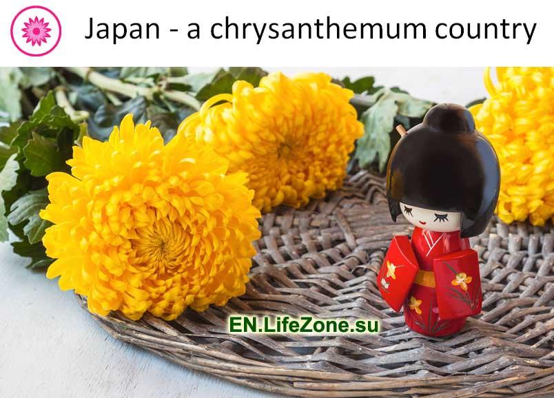Japan---a-chrysanthemum-country