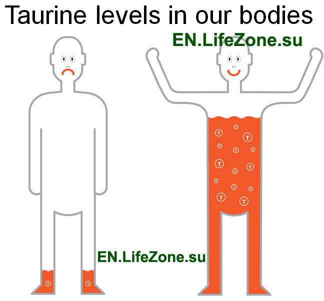 Taurine-levels-in-our-bodies