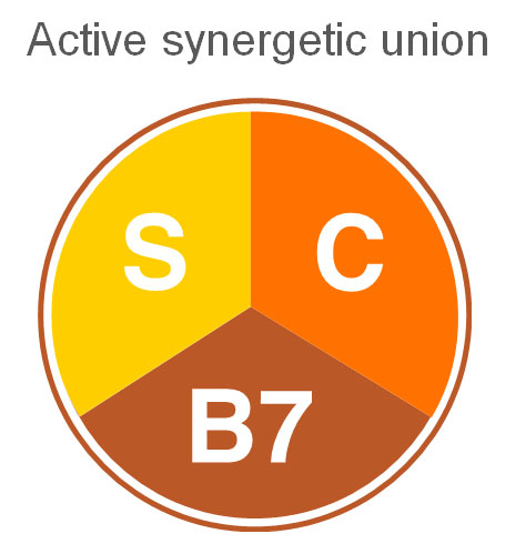 synergetic_union